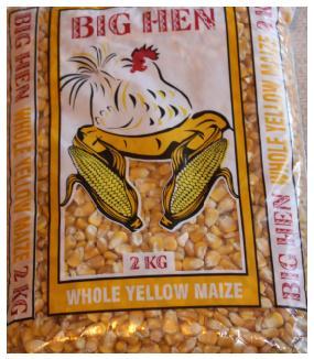 popcorn-seeds